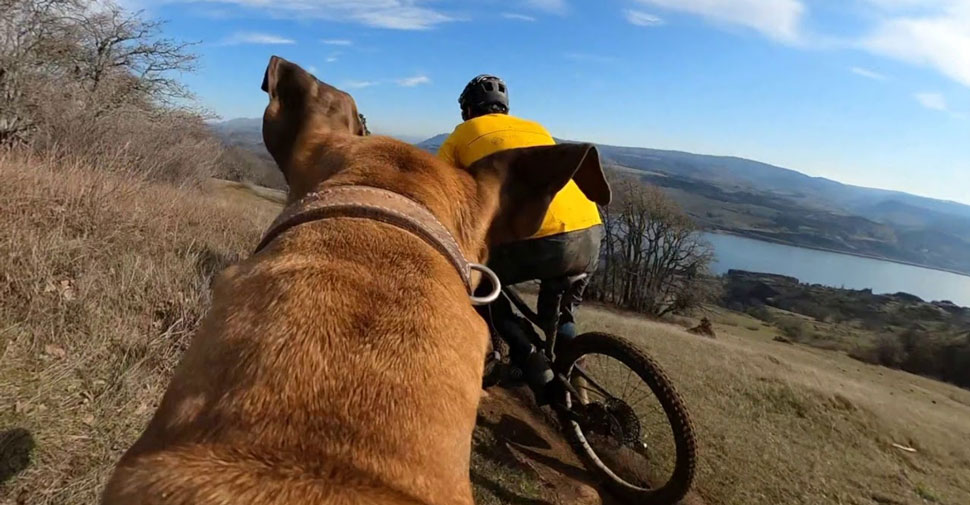 Trail dog video